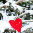 Stock Photo: Heart on branch of fir