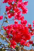 Flores de verano — Foto de Stock