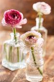 Ranunculus in vase — Stock fotografie