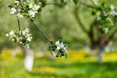 Spring park — Stock Photo