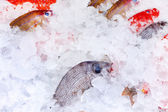 Fish on ice — Stock Photo