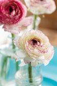 Ranunculus in vase — Foto de Stock