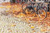 Kola parkuje ve stockholmu — Stock fotografie