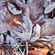 Photo: Frozen leaves