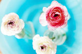 Ranunculus in vase — Stockfoto