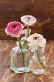 Ranunculus in vaas — Stockfoto