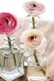Ranunculus in vase — Stock Photo