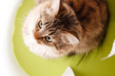 Nice cat — Stock Photo