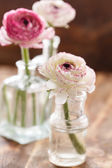 Ranunculus in vase — Stockfoto