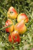 Fresh pears — Stock Photo