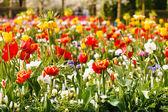 Spring garden — Stock Photo