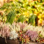 Autumn plants — Stock Photo #46413951