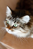 愛らしい猫 — ストック写真