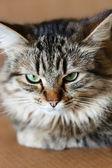Adorabile gatto — Foto Stock