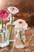 Ranunculus — Photo