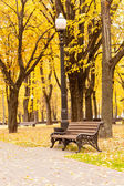 Bench in park — Stock Photo