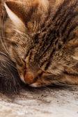Nice cat — Stock Photo
