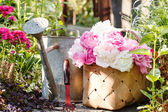 Peonies in basket — Stock Photo