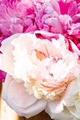 Bouquet de pivoines — Photo
