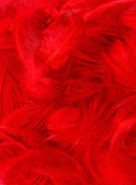 Farbe federn — Stockfoto