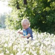 Little baby boy sitting on a green meadow — Stock Photo #48216185