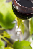 Red wine in glass with grape leaves — Stock Photo