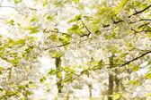 Spring tree — Stock Photo