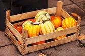 Pumpkin basket — Stock Photo