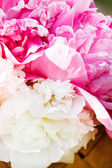 Peonies bunch — Stock Photo