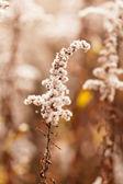 Höstens växter — Stockfoto