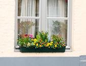 Flores na janela — Fotografia Stock