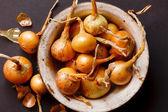 Cipolla fresca — Foto Stock