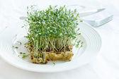 Green watercress — Stock Photo