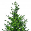 Fir tree — Stock Photo #13260139