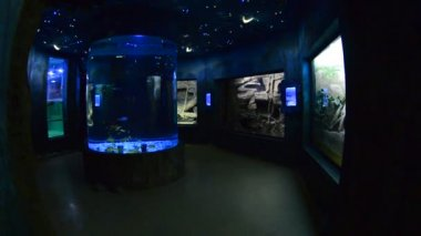 Oceanarium — Stockvideo
