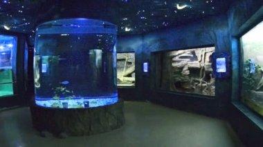 Aquarium hall — Stock Video