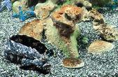 Marine life — Stock Photo