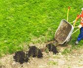 Planting — Stock Photo