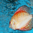 Stock Photo: Discus