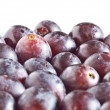 Plums — Stock Photo #31576915