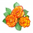 Fiery rose — Stock Photo #41564411