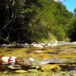 Stock Video: Fly fishing