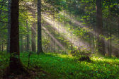 Morning Sunlight — Foto Stock