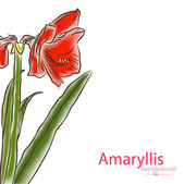 Watercolor half amaryllis left side — Stock Vector
