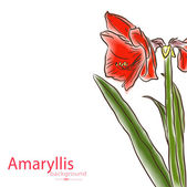 Watercolor half amaryllis right side — Stock Vector
