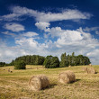 Big hay rolls on a beautiful field — Stockfoto #27232699
