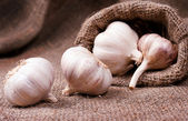 Fragrant garlic on background of coarse cloth — Stock Photo
