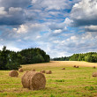 Big hay rolls on a beautiful field — Stock Photo #29445623