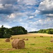 Big hay rolls on a beautiful field — Stockfoto #29445623