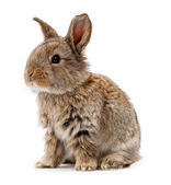 Animals. Rabbit isolated on a white background — Stock Photo